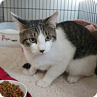 Adopt A Pet :: Archer - Acushnet, MA