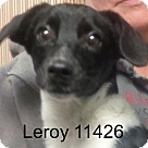 Adopt A Pet :: Leroy