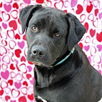Adopt A Pet :: Sapphire Rose - Yucaipa, CA