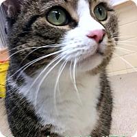 Adopt A Pet :: Hannah - Tiffin, OH