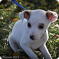 Adopt A Pet :: Chiquitita - Broomfield, CO