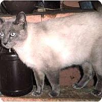 Adopt A Pet :: My-ling - Warren, OH