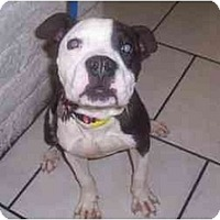 Adopt A Pet :: Brock - Scottsdale, AZ
