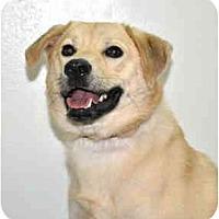 Adopt A Pet :: Liberty - Port Washington, NY