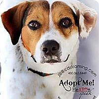 Adopt A Pet :: MARIGOLD - Phoenix, AZ