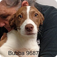 Adopt A Pet :: Bubba - baltimore, MD