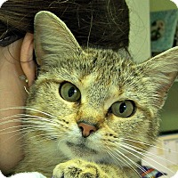 Adopt A Pet :: Angel - Toledo, OH