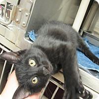 Adopt A Pet :: Sonny - Athens, GA