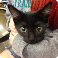 Adopt A Pet :: Matthew - San Ramon, CA