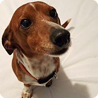 Adopt A Pet :: Reno - Andalusia, PA