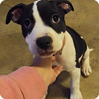 Adopt A Pet :: Taylor - Nashville, TN