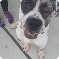Adopt A Pet :: Bruce - Grand Blanc, MI