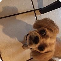 Adopt A Pet :: Vinny - Naples, FL