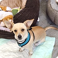 Adopt A Pet :: Timmy - Brea, CA