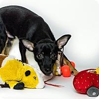 Adopt A Pet :: Conner - Yelm, WA