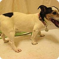 Adopt A Pet :: *JOSIE - Upper Marlboro, MD