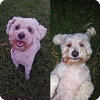Adopt A Pet :: Champ - Turlock, CA