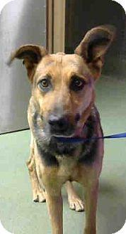 Shepherd (Unknown Type) Mix Dog for adoption in San Bernardino, California - URGENT on 10/8 @DEVORE