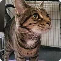 Adopt A Pet :: Tina - Plainville, MA