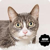 Adopt A Pet :: Kayak - Wyandotte, MI