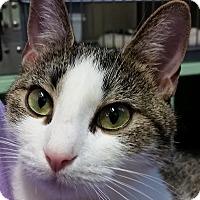 Adopt A Pet :: Piper - Princeton, MA