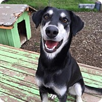 Adopt A Pet :: Hazel - The Dalles, OR