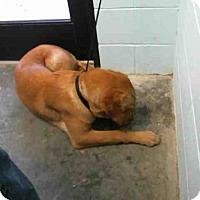 Adopt A Pet :: BOO - Tulsa, OK