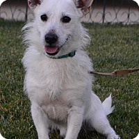 Adopt A Pet :: Zeppelin - Palo Alto, CA