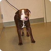 Adopt A Pet :: Mathew - Wildomar, CA