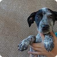 Adopt A Pet :: Kayle - Oviedo, FL