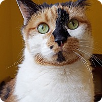 Adopt A Pet :: Patches - Nashville, TN
