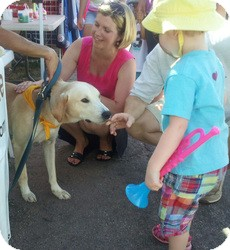 Labrador Retriever Mix Dog for adoption in New Canaan, Connecticut - Dante