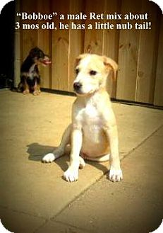 Retriever (Unknown Type) Mix Puppy for adoption in Gadsden, Alabama - Bobbie