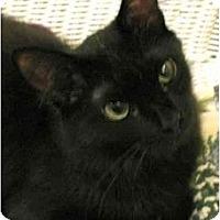 Adopt A Pet :: KITTENPeanut - Plainville, MA