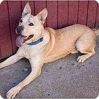 Adopt A Pet :: Bacchus - Portland, OR