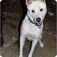 Adopt A Pet :: HwanHei - D - Southern California, CA