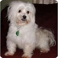 Adopt A Pet :: Nick - Mooy, AL