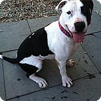 Adopt A Pet :: MELA - Dennis, MA