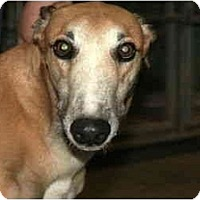 Adopt A Pet :: Solo (Stat Soloman) - Louisville, KY