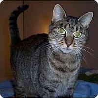 Adopt A Pet :: Daphne - Feeding Hills, MA
