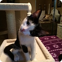 Adopt A Pet :: JILL - Higley, AZ