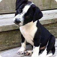 Adopt A Pet :: Charlie - Marlton, NJ