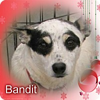 Adopt A Pet :: Bandit - Crowley, LA