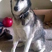 Adopt A Pet :: Casper - North Richland Hills, TX