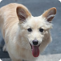 Adopt A Pet :: Dorchester - Norwalk, CT