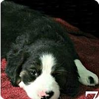 Adopt A Pet :: Pokey - Lufkin, TX