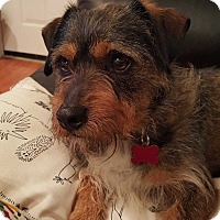 Adopt A Pet :: Luca - Encino, CA
