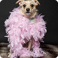 Adopt A Pet :: Sasha - Baton Rouge, LA
