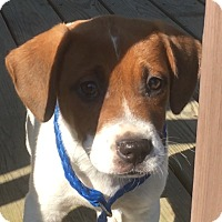 Adopt A Pet :: Glen - Hagerstown, MD