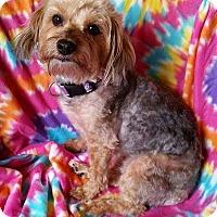 Adopt A Pet :: Delilah Turner - Urbana, OH